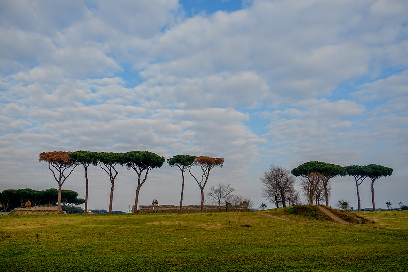pini di Roma
