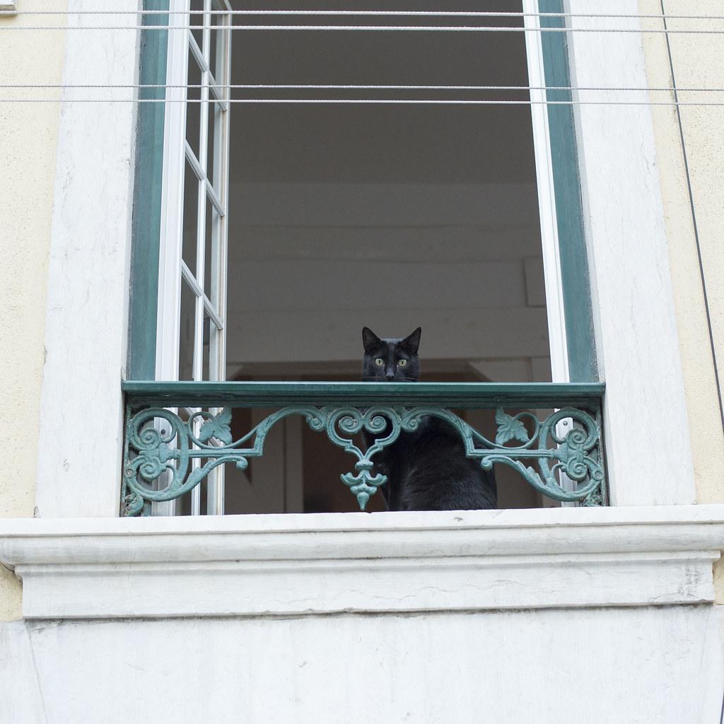 Дом с кошками