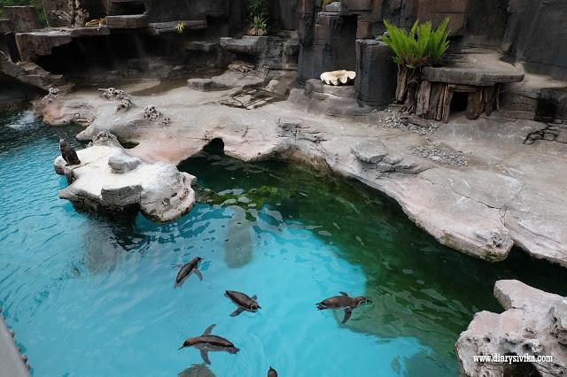 aquaticland prigen 1