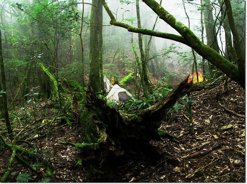 魔幻森林營地 1