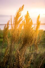 03-08-2016 Sunset at Golden Gardens 3