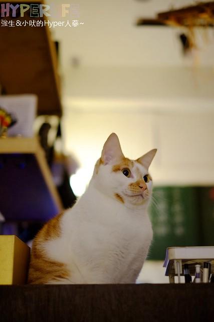 26014034252 40f54c4077 z - 超可愛貓咪寵物餐廳【巷子有貓】,逢甲巷弄無菜單美食~一定要預約才吃的到的日式家常菜!(已歇業)