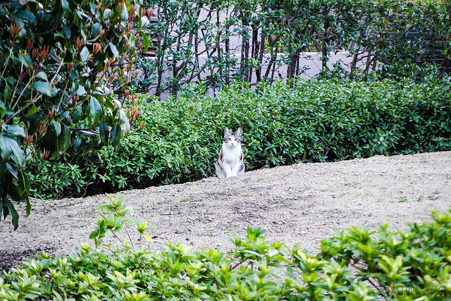 Today's Cat@2016-04-08