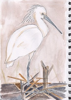 white bird pen and wash sketch
