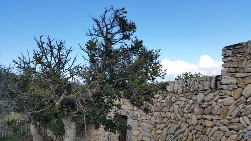 26471826712 142e1c3319 Tag 6, Cuevas del Drach