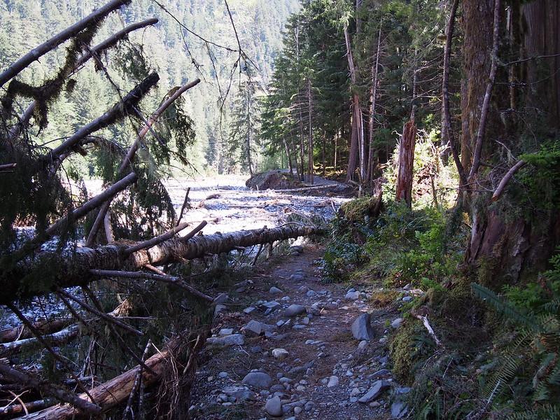 Carbon River Trail