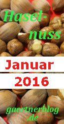 Garten-Koch-Event Januar 2016: Haselnuss [31.01.2016]