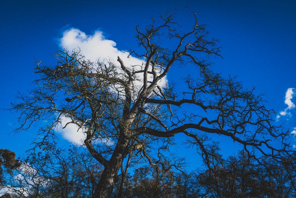 Sugarloaf Peak Amador County California Tripcarta