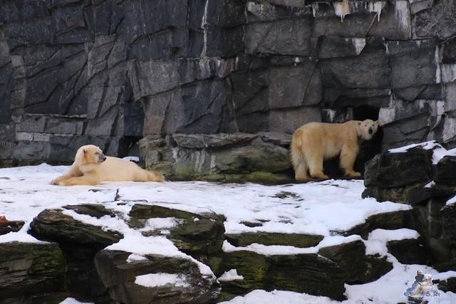 Tierpark Berlin 09.01.2016  049