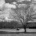 Black and white landscape by Vincent F Tsai