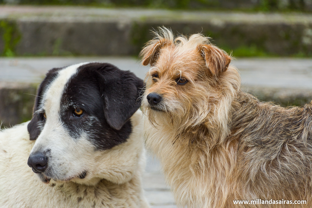 Perros de la casa atentos a nuestros pasos