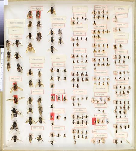 C.G. Thomson Hymenoptera 1