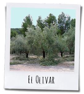 De olijfgaarden van Masia el Altet liggen op meer dan achthonderd meter hoogte in een kleine vallei die omringd wordt door twee natuurparken
