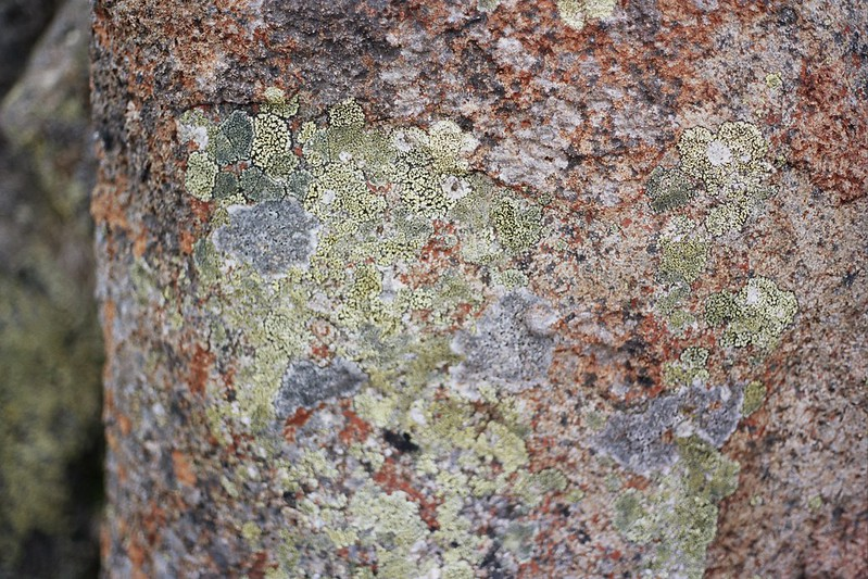 Tasmania - beautiful rocks and their patterns // Schorlemädchen