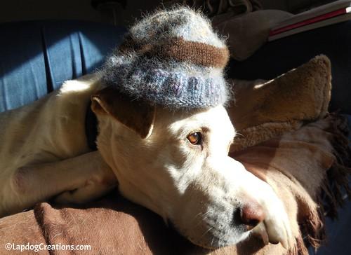 My Sweet Handsome Boy, Zeus. Miss him so much. He was always a great #handknit model! #DogMomsWhoKnit #RainbowBridge #CanineCancerAwareness #HandKnit #happyolddog #LapdogCreations ©LapdogCreations