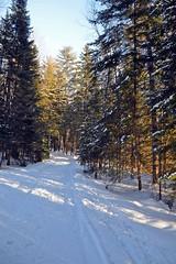 Snow Covered road - Elk Viewing Sleigh Ride - Thunder Bay Resort, Hillman MI