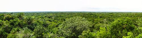 Lamanai: vue sur la canopée depuis le Grand Temple