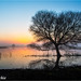 Bare Tree At Sunrise by Mimi Ditchie
