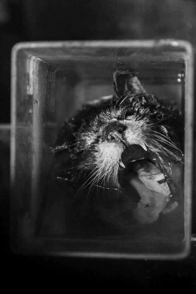 驚魂比利時「廢棄獸醫學院」福馬林的怪誕美學7