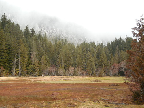 The meadow at Longmire's mineral Springs
