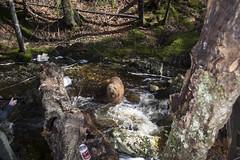 Hobson's Lake Trail