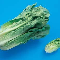 lettuces-0006