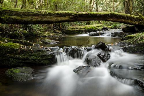 longexposure tree green water creek flow waterfall moss rocks forrest wideangle sigma1770mm styxriver nikond7000