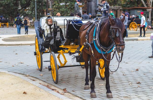 Horse - Seville, Spain