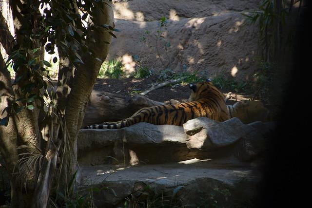 san diego zoo-110