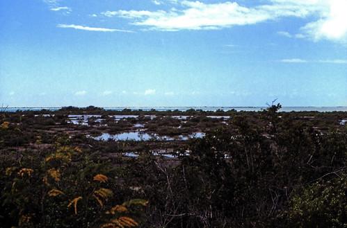 analog 35mm natur slide dia longisland scan insel 1989 bahamas amerika 1980s landschaft thebahamas karibik nordamerika mittelamerika mangroven contax137md analogfilm kleinbild canoscan8800f kbfilm westindischeinseln 1980er mangrovebush diapositivfilm