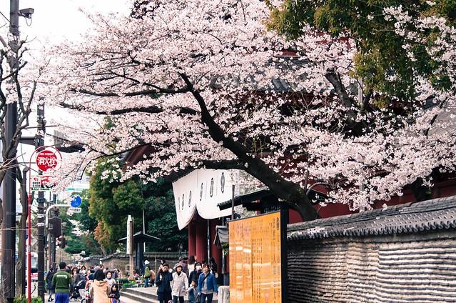 2016年4月2日お花見-8