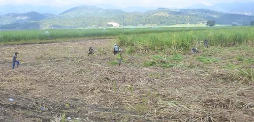 P16-Negros-San Carlos-Dumaguete-Route (2)