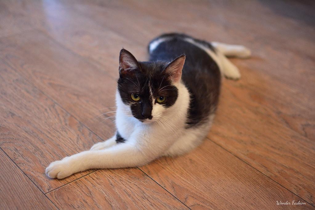 lady cat caffe5