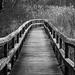 Boardwalk by evxe