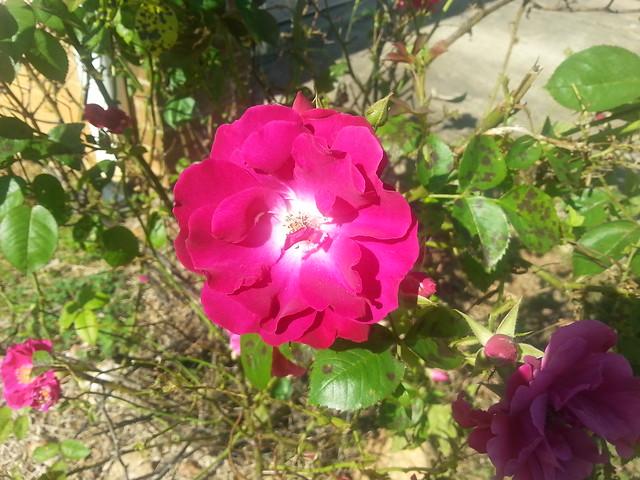 Spring Flower zuriryan.com