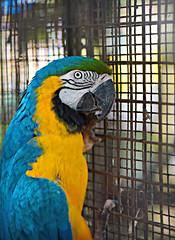 Guyana Zoo Jan 2016 #24