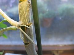 repotting dendrobium