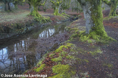 Parque Natural de Gorbeia  #DePaseoConLarri #Flickr -3075