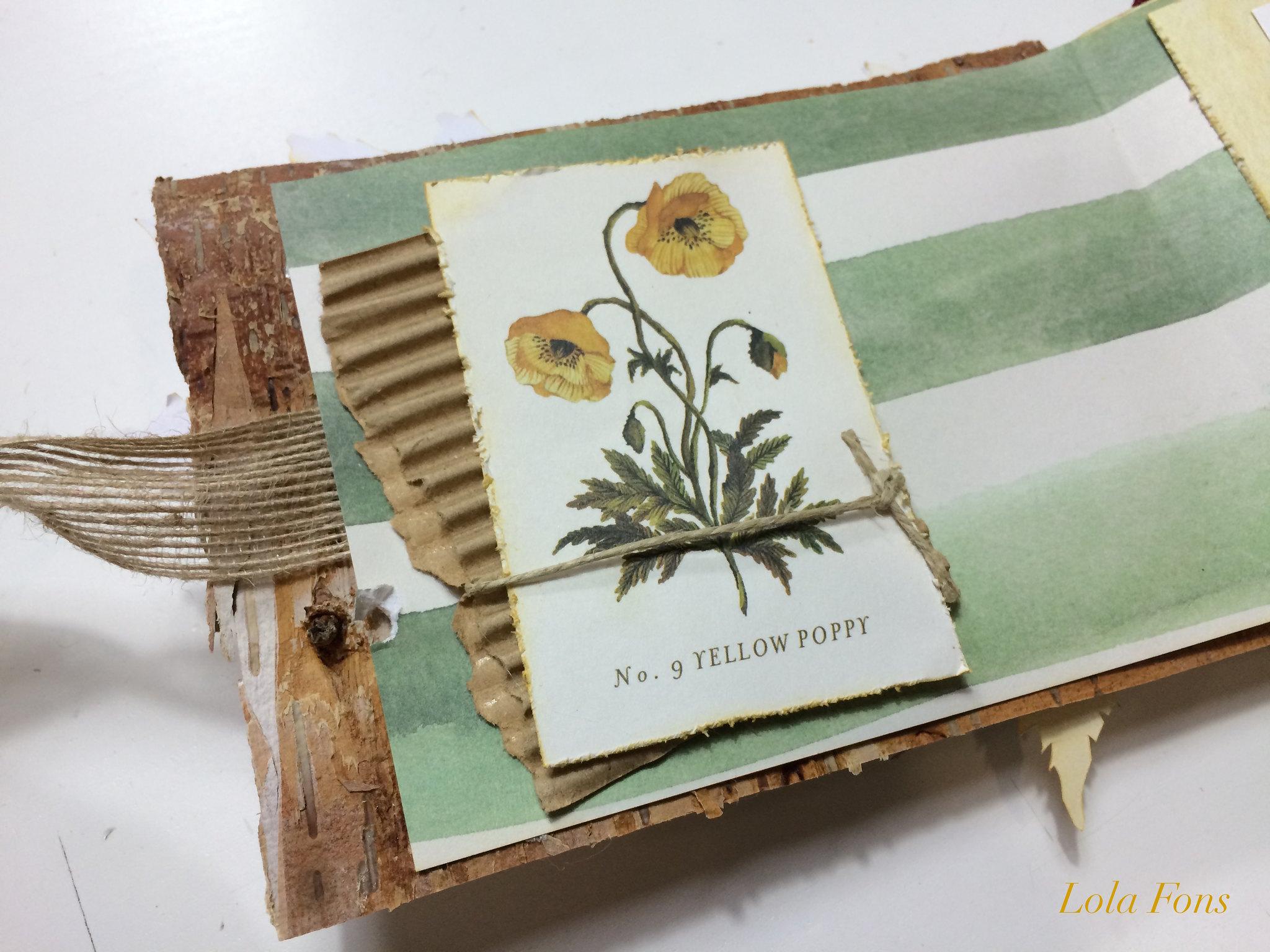 Wildflower_foto_13