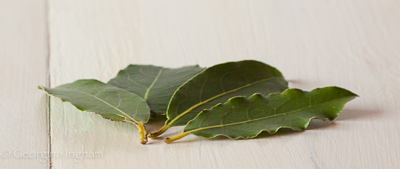 Georgina Ingham Culinary Travels - Photograph Fresh Bay Leaves