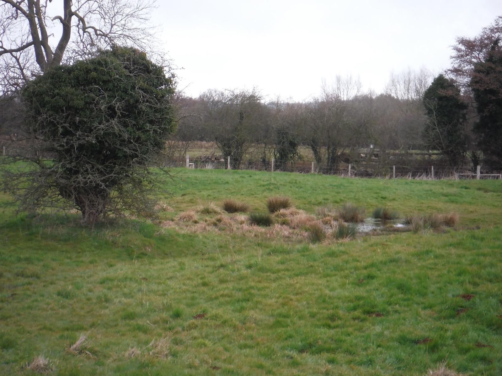 Maggots Moor in Flitwick Moor SWC Walk 231 Flitwick Circular