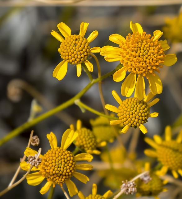 Flower 5_7D2_130316