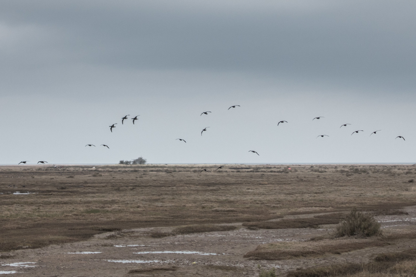 Birds Over Stiffkey Saltmarshes