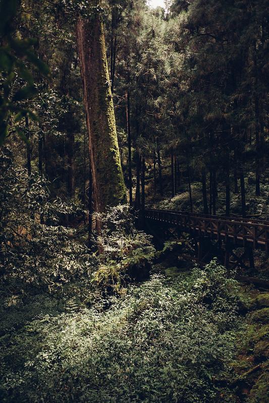 阿里山 Alishan|富士 Fujifilm X70 28mm f/2.8