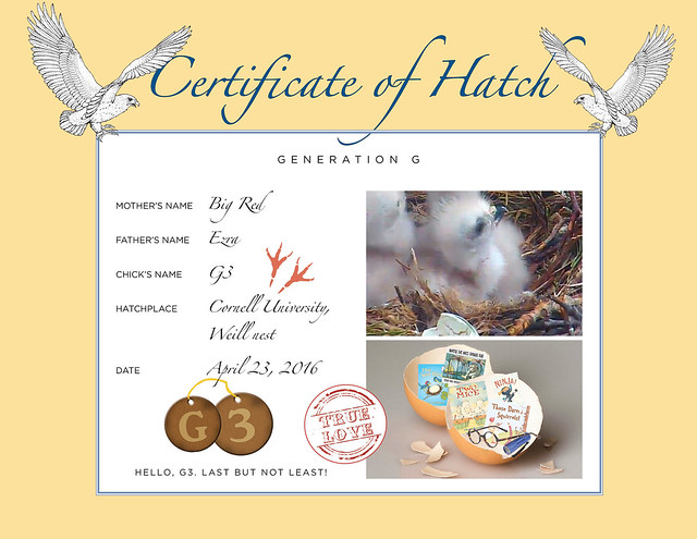 2016 Hatch Certificate-G3