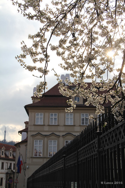 Polish Embassy & Budding Trees