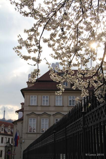 Polish Embassy & Budding Trees