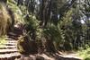 Mt. Davidson - Trail from cross
