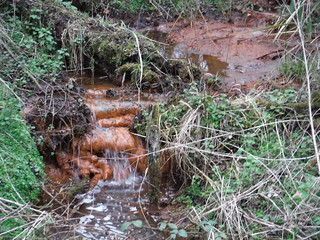 Iron-Rich Stream, Flitwick Moor