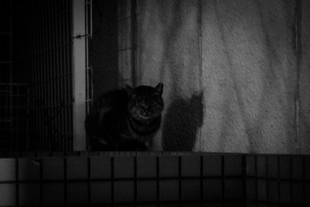 Today's Cat@2016-01-15